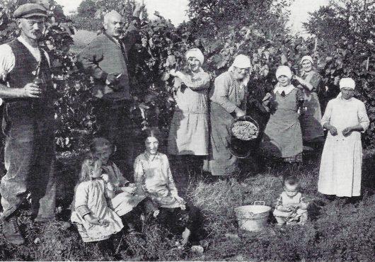 Weinlese um 1930