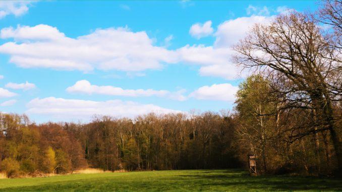 Schelmenwald
